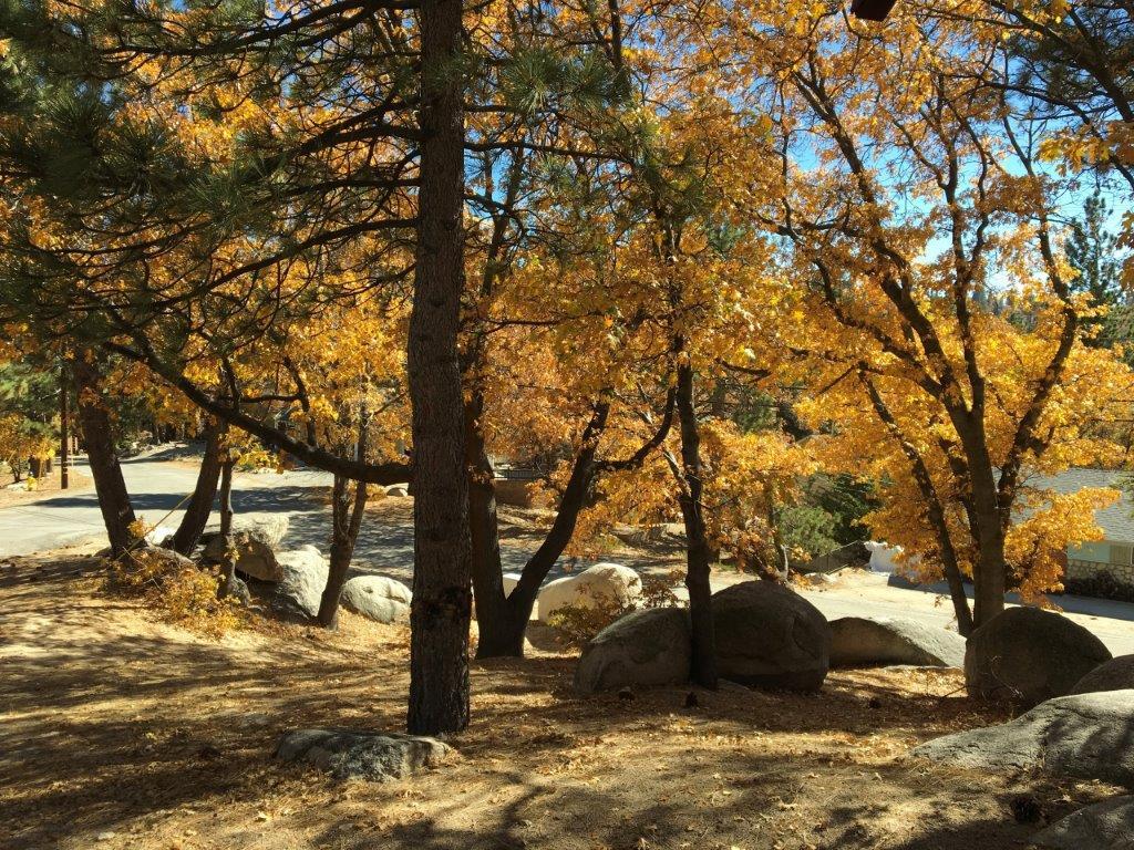 Green Valley Lake Cozy Cabin Rentals